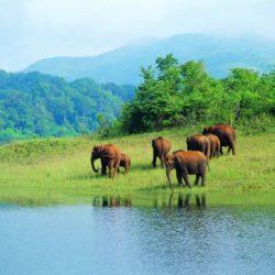 Ahmedabad to Kerala honeymoon package 4 Nights 5 Days by Flight