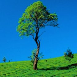 Ahmedabad to Kerala tour package 1 Night 2 Days by Flight