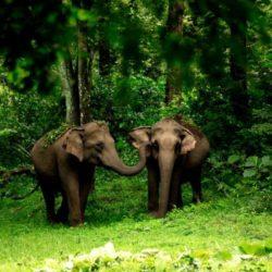 Belgaum to Kerala tour package 5 Nights 6 Days by Flight