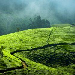 Coimbatore to Kerala honeymoon package 1 Night 2 Days by Flight