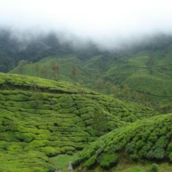 Ernakulam to Kerala tour package 3 Nights 4 Days by Car