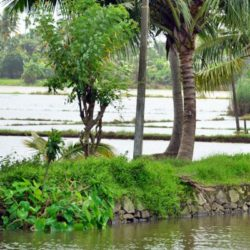 Goa to Kerala tour package 1 Night 2 Days by Flight