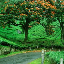 Honeymoon tour packages from Belgaum Kerala