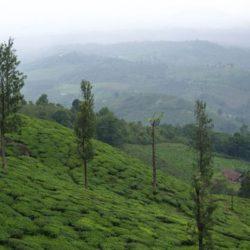 Kolhapur to Kerala tour package 3 Nights 4 Days by Flight
