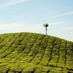 Madurai to Kerala tour package 6 Nights 7 Days by Train