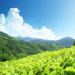 Mysore to Kerala honeymoon package 6 Nights 7 Days by Train