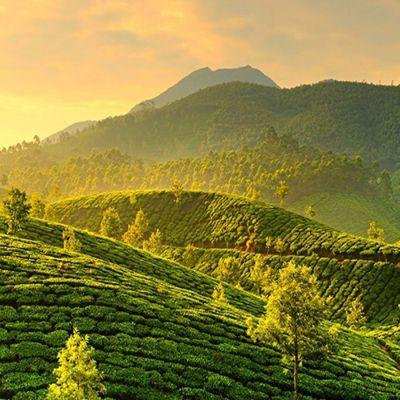 Nagpur to Kerala honeymoon package 4 Nights 5 Days by Flight