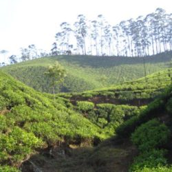 Surat to Kerala tour package 9 Nights 10 Days by Train