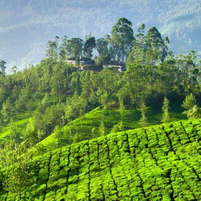 Vadodara to Kerala tour package 1 Night 2 Days by Flight