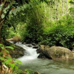 Vijayawada to Kerala tour package 5 Nights 6 Days by Flight