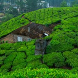 Visakhapatnam to Kerala tour package 1 Night 2 Days by Flight